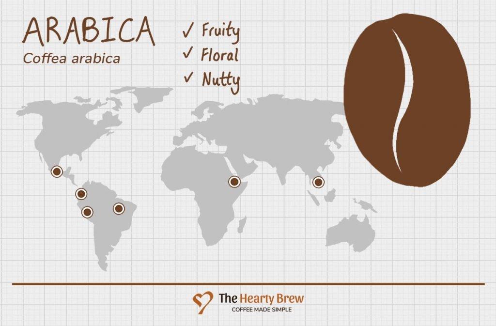 diagram of Arabica coffee beans