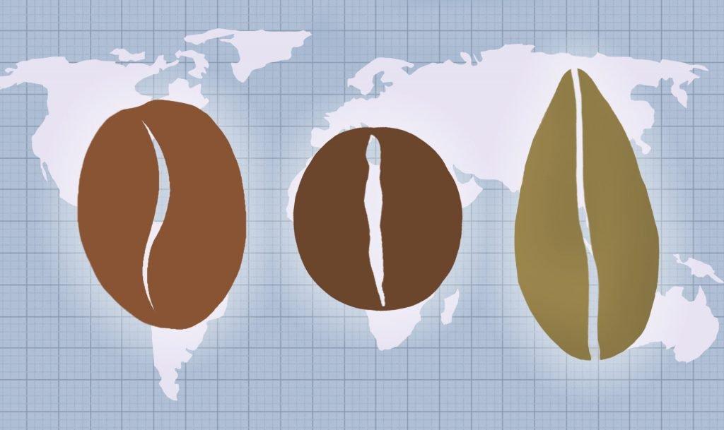 arabica vs robusta vs liberica coffee beans